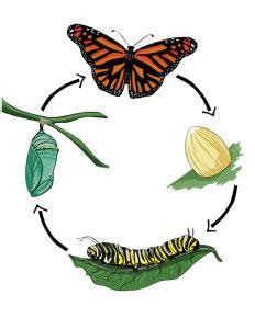 Schools help: The metamorphosis essay topics top service!