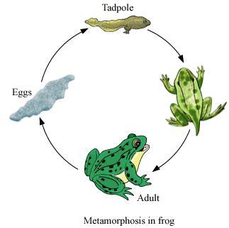 Metamorphosis essay